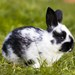 Iny zajacik v zahrade