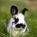 Opat nas zajacik v travicke