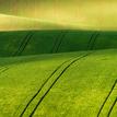 --Field Lines--