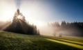--Bavarian Tree--⠀⠀⠀⠀⠀⠀⠀⠀⠀⠀⠀⠀⠀⠀