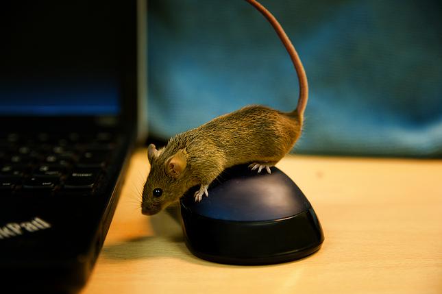 Nie je myš ako myš