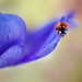 Petals Lady