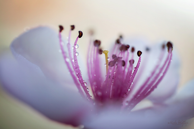 V jarnej rose