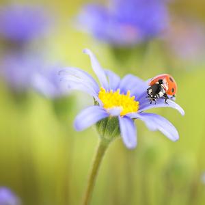 Spring Lady
