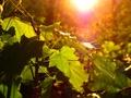 Zeleným žľabom 1