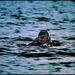 Potápač 2