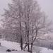 Rozpravkovy strom