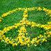 Peace :)