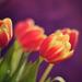 vo fabách jari