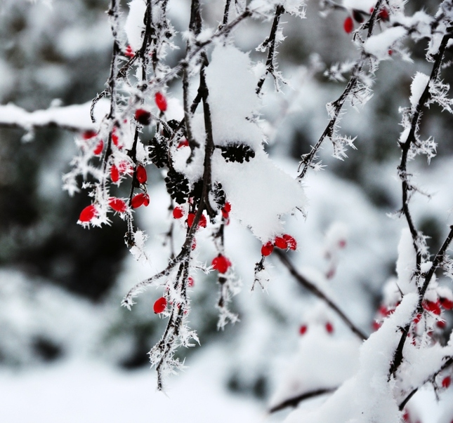 farebná zima