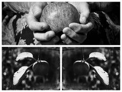 jabĺčková