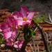 Kvet medzi múrmi