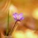 kvet.....