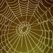 pavúcia sieť....