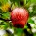 Posledne jablčko.