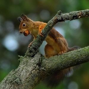 Veverička-ešte jedna.