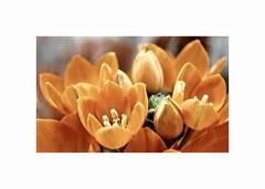 Kvety pre štastie