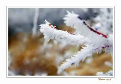 Zimné farby