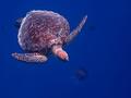 posledna sekunda meduzy
