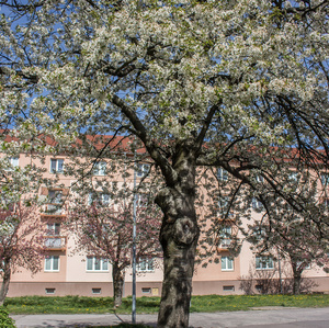 Jar v meste (2)