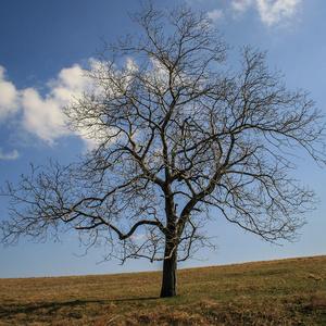 Cestou k stromom