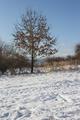 Zima s Jesňou