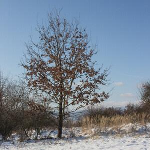 Zima s Jeseňou
