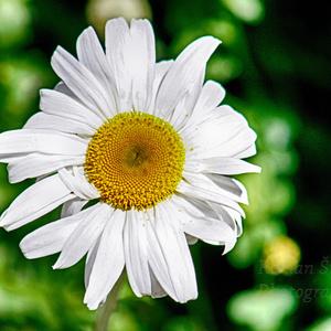 Kvet pre svet 1