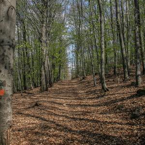 Jarná prechádzka lesom