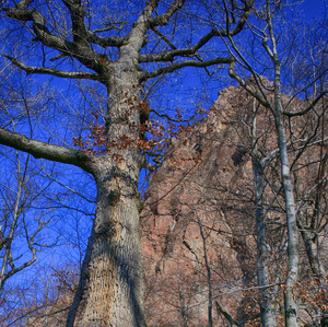 Cestou k stromom 8