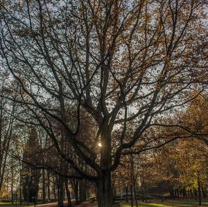 Jeseň v Parku ..
