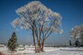 Zima pri Mŕtvom Ramene