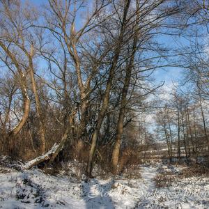 Zima pri Lutilskom Potoku (5)