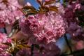 kvetovo