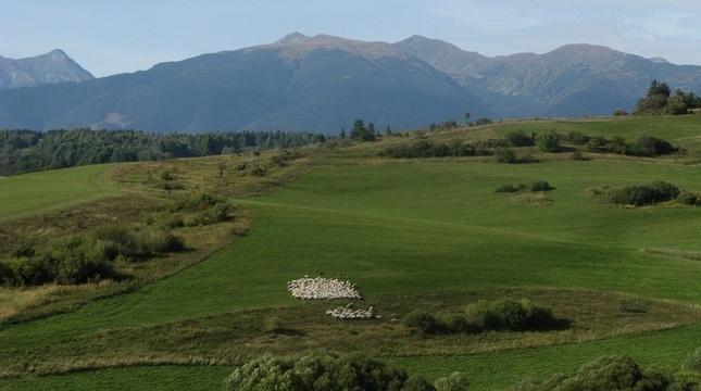 Tatranské ovečky