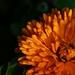 flower III.