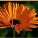 flower II.