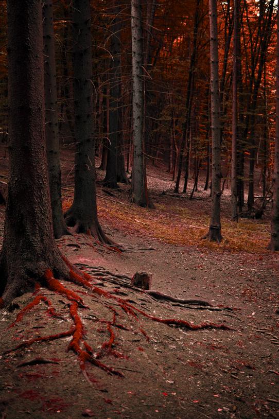 Cerveny les