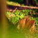 jarná zeleň