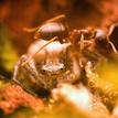 mravec na pavúkovy