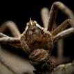 pavúk 2