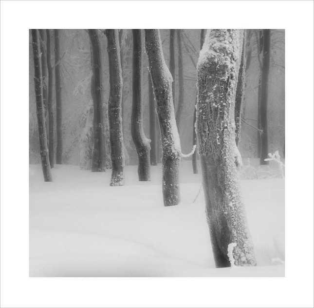Ticho tancujúcich stromov