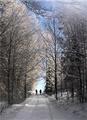 Cesta v Raji