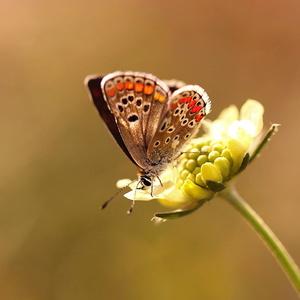Motýlia jeseň