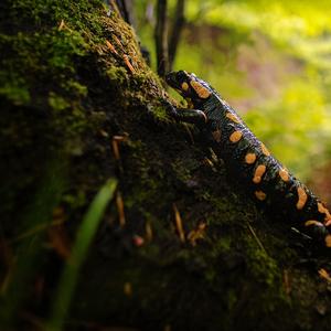 Po dazdi v lese