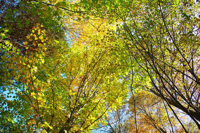 Autumn forest II.