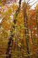 Jeseň v lese 1.