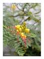 Stredomorská kvetina