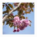 Jarné kvety 1.