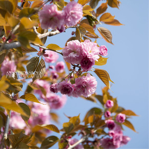 Jarné kvety 2.
